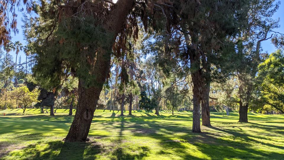 2011223_iphone12minireview_treespixel5photo