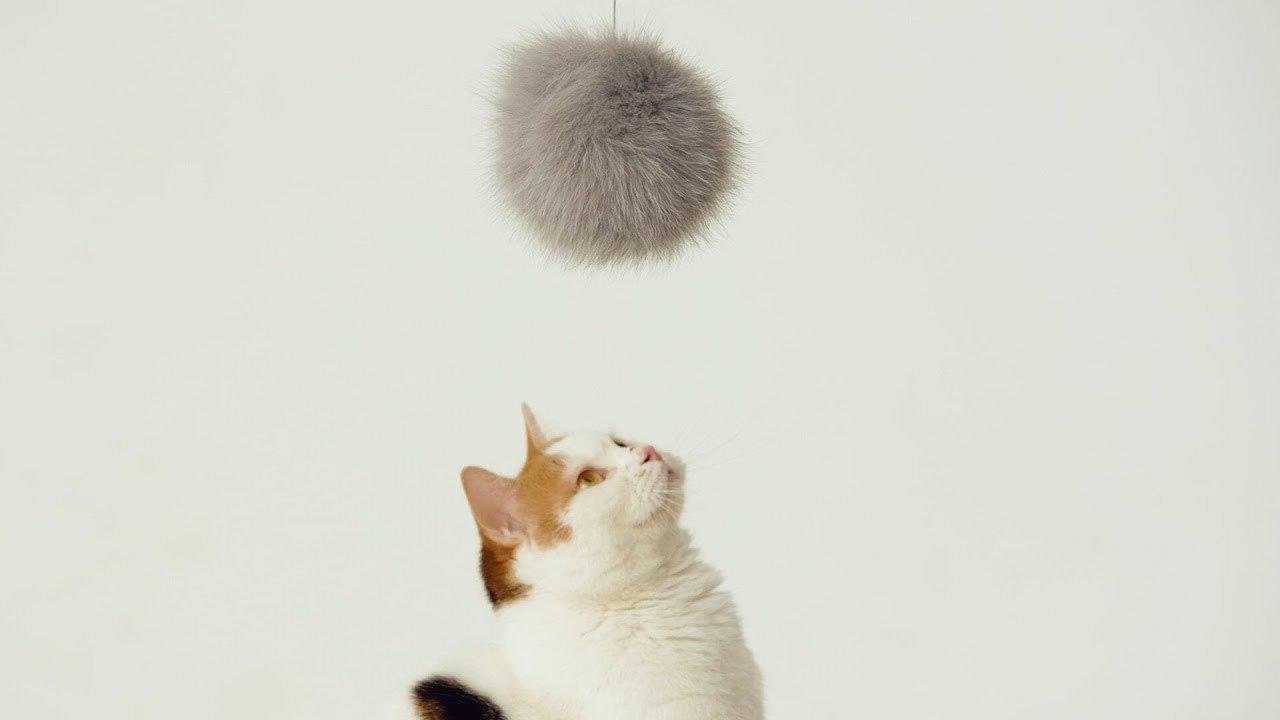 猫耳が付いたにゃん。ネコを驚かさない猫型風船ドローン「にゃろーん」