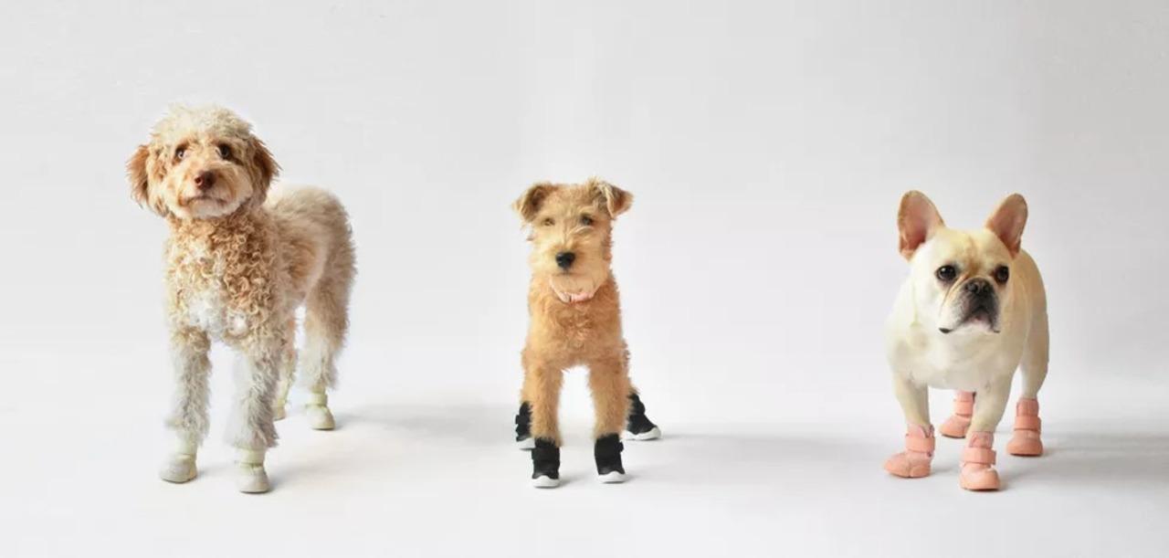 獣医師が推奨するNY発の犬用スニーカー、肉球をがっちり保護できて良さそう