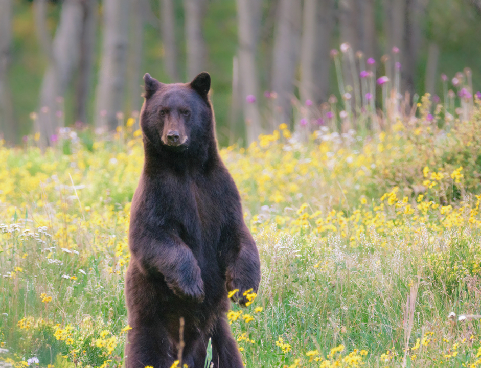 クマが人懐っこくなったあと死んでしまう謎の脳炎発症中