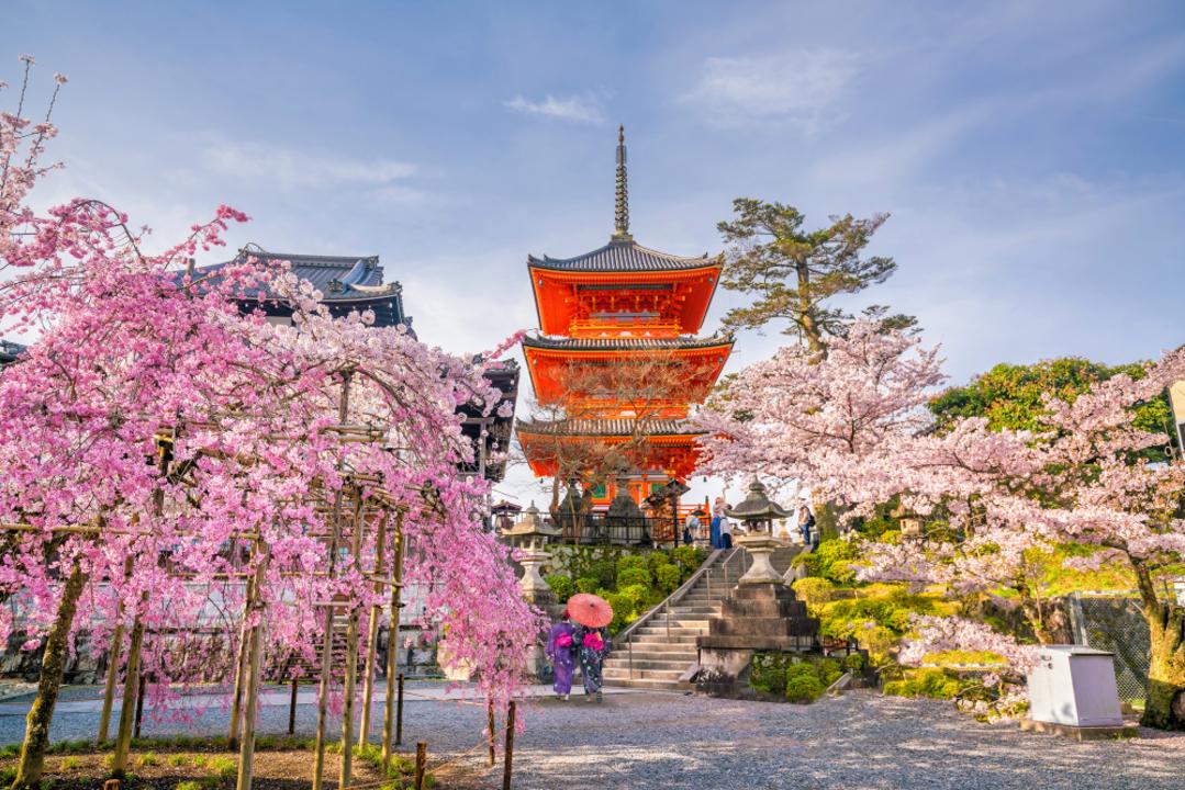 京都で桜がこんなに早く咲くのは実に1200年ぶりのこと