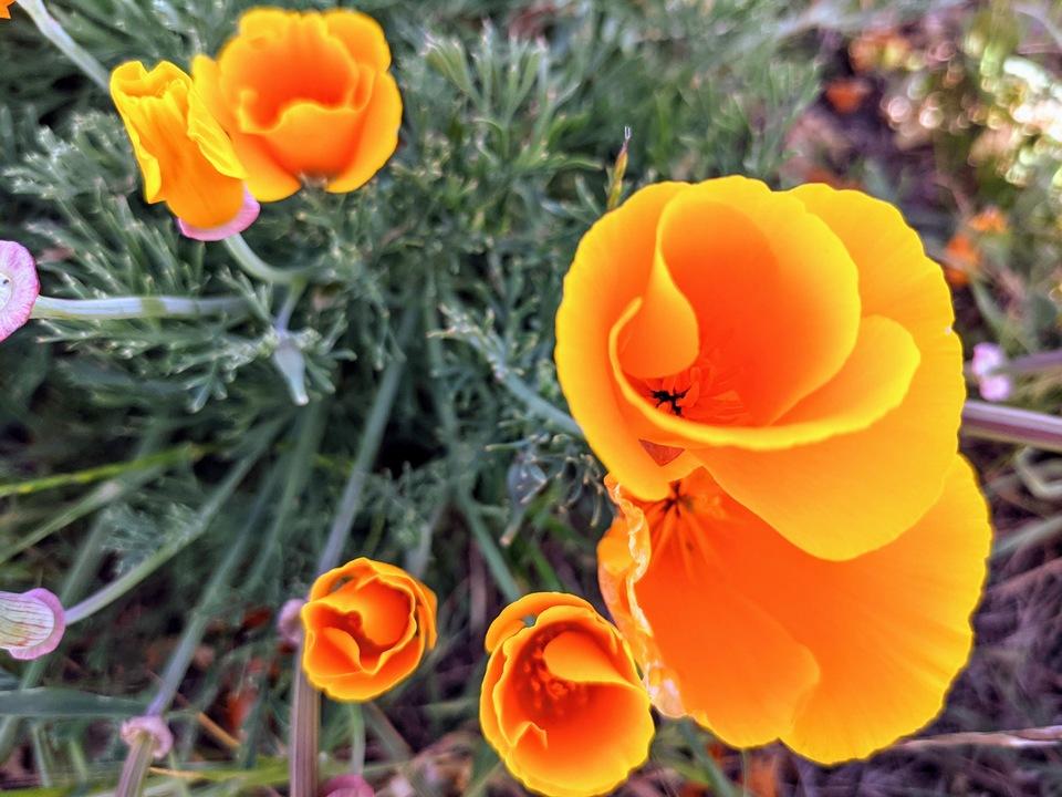 春は野歩き。Googleレンズで花の名前が全部わかったよ