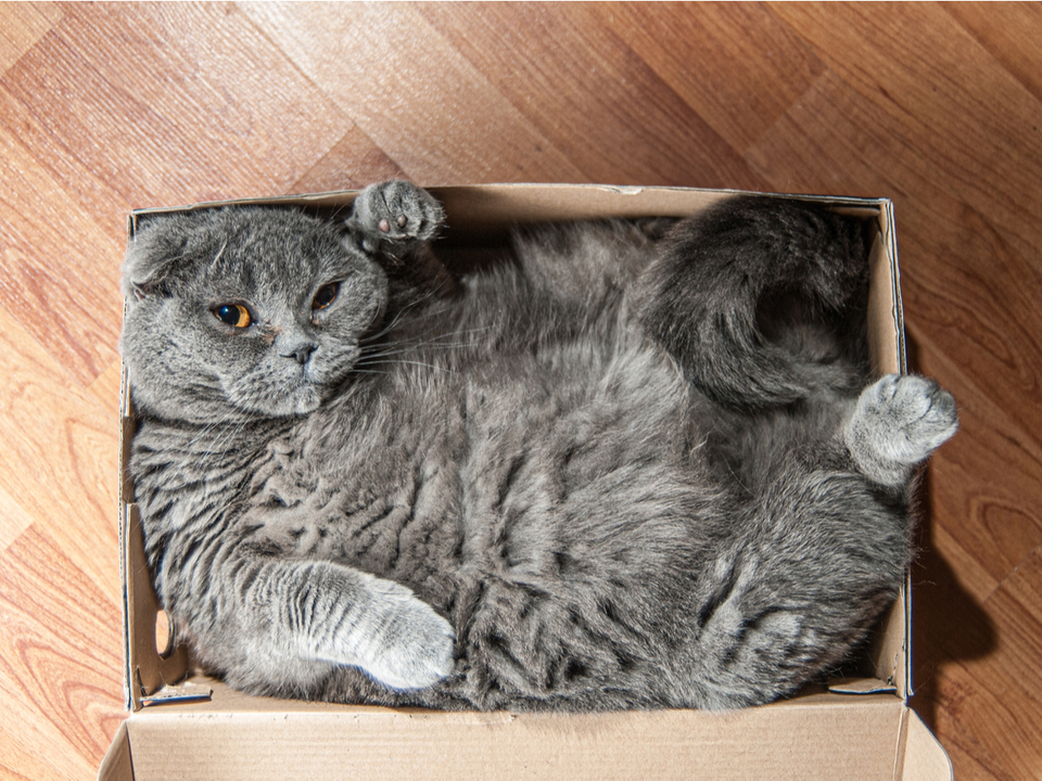 猫は四角の中に座るのが好き。それがたとえ目の錯覚でも