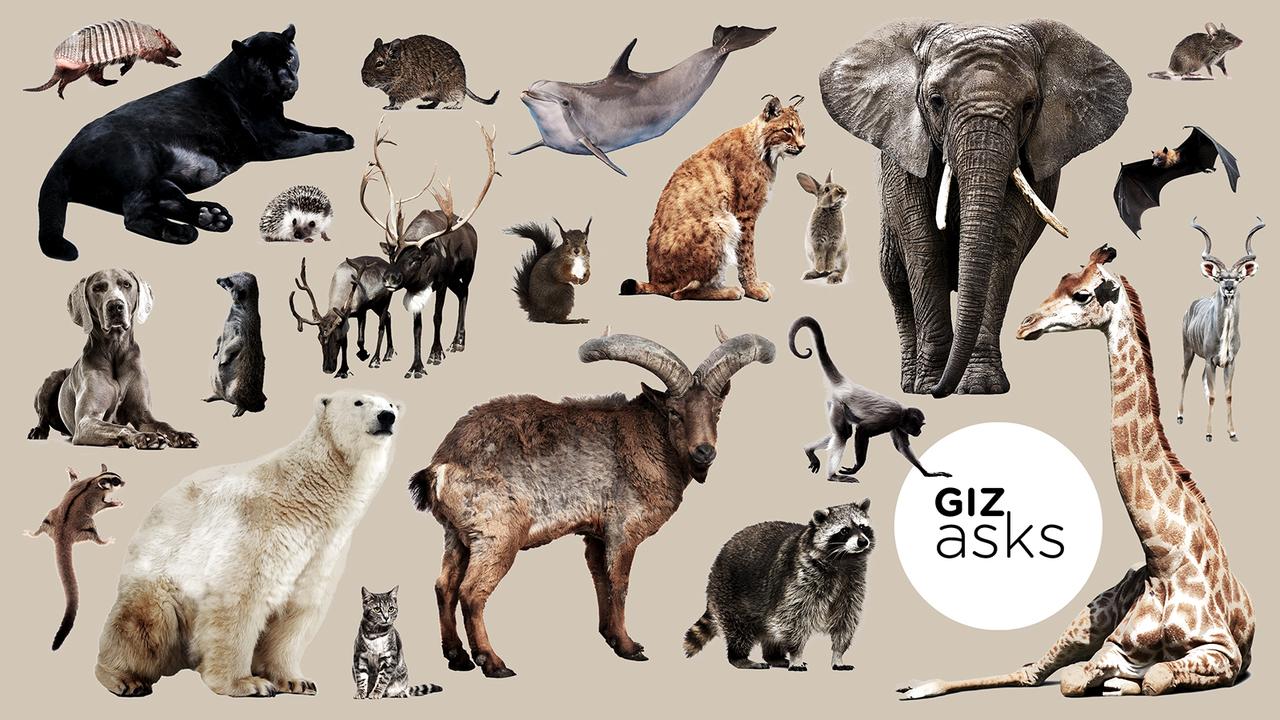 鳥や虫は超カラフルなのに、哺乳類はどうしてこんなに地味なの?
