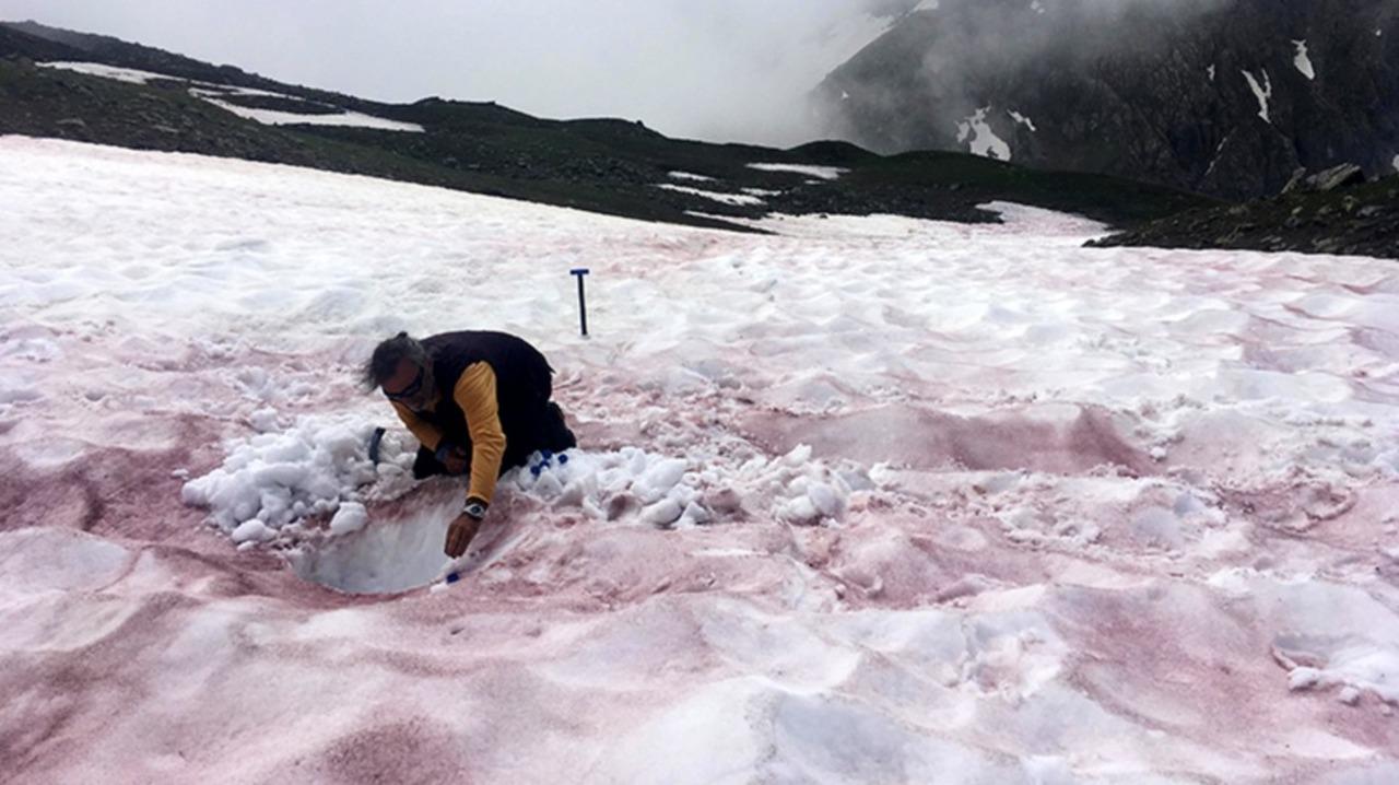 アルプスの白い雪を赤く染める藻類から気候変動の影響を読み解く研究