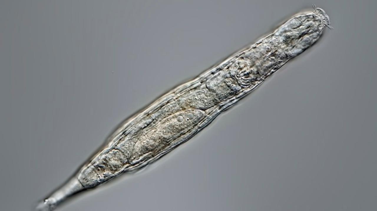 2万4000年のあいだ永久凍土で眠っていた生物が目覚める