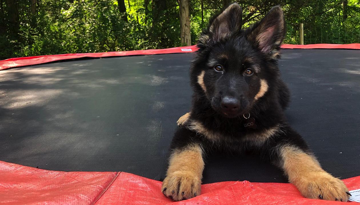 犬は生まれてからすぐ人間と親しみ始める