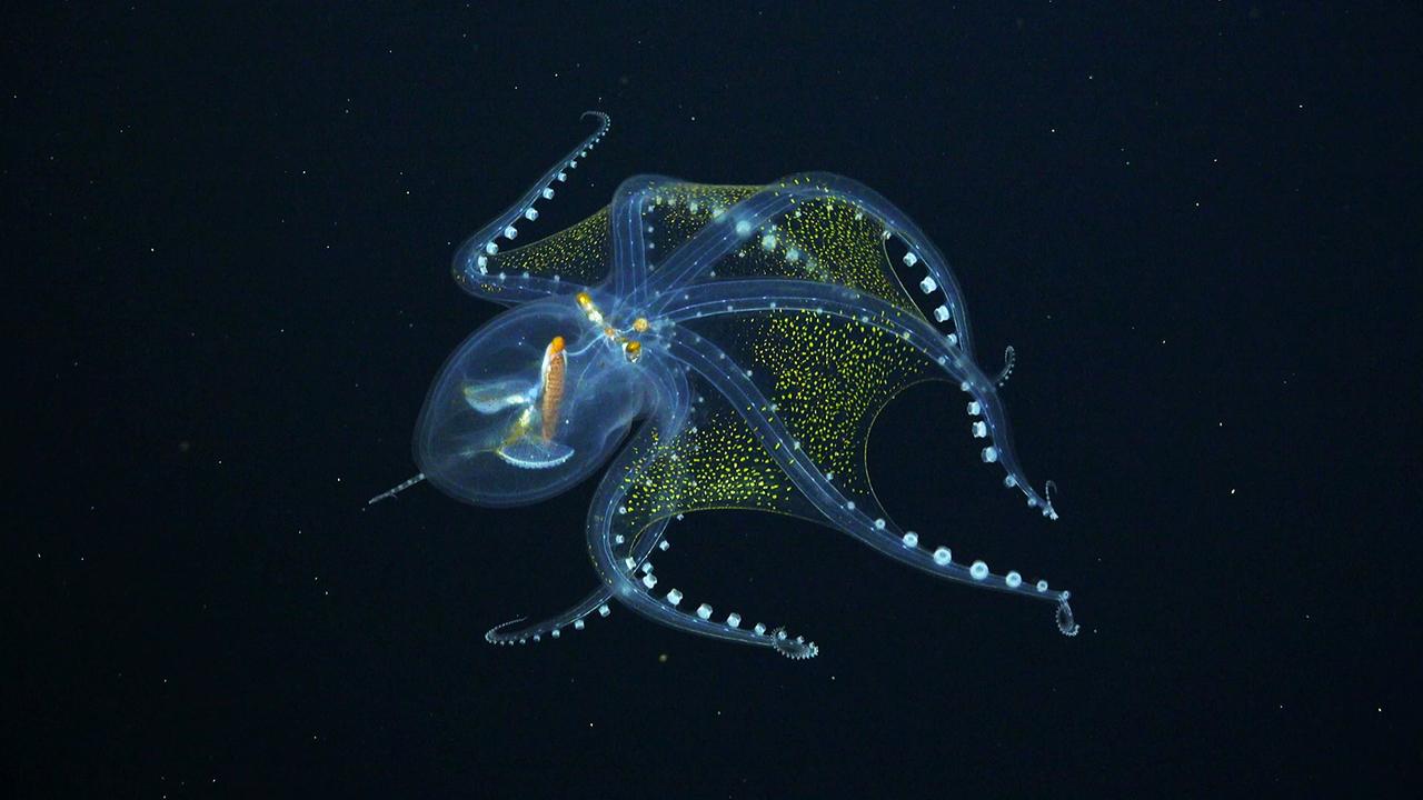 最近新たに発見された、シュールな深海生物の姿