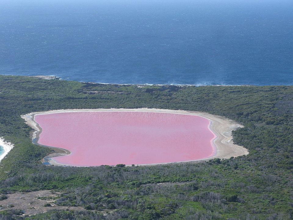 ひえ…アルゼンチンの湖がピンク色になる。原因は防腐剤