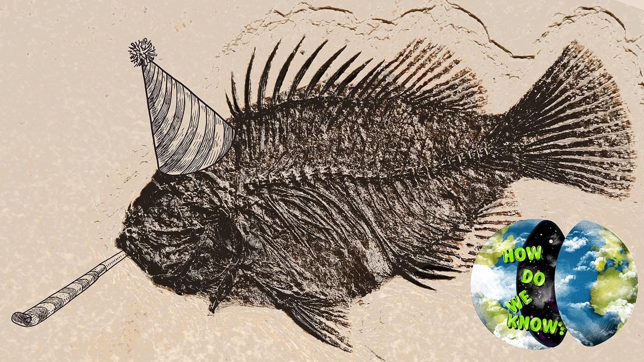 化石がどれくらい古いのかを知る方法