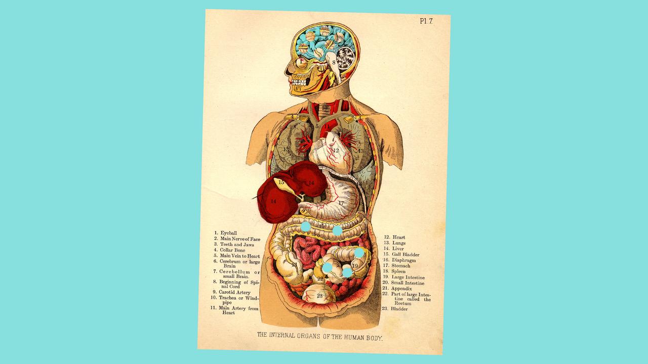 腸内細菌と認知障害:腸脳相関のメカニズムは想像以上に奥深そう