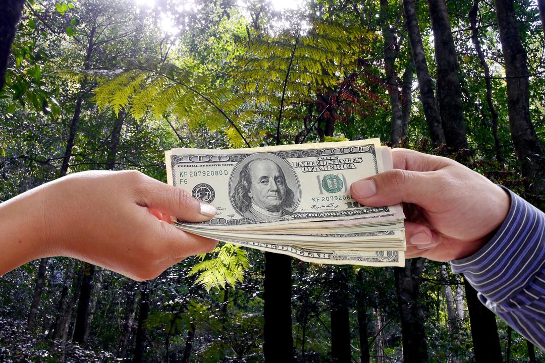 Amazonはアマゾンの熱帯雨林の再植林に投資している