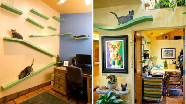 投資額350万円! 自宅を改築して猫のワンダーランドを作ったよ(写真)