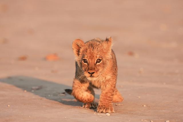 140307_lion.jpg