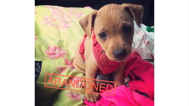 捨て犬を守るため、デートアプリ「Tinder」を使った素敵なプロジェクト