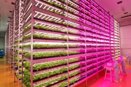宮城県の全面LED植物工場。仕組みとその狙いは