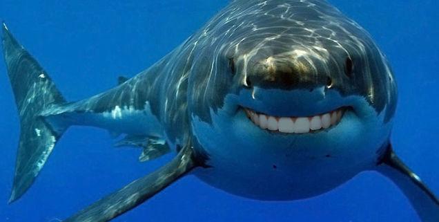 グーグルの海底ケーブル、サメに食べられていた