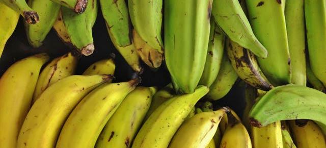 バナナだけどオレンジな新開発フルーツ、人体での試験開始