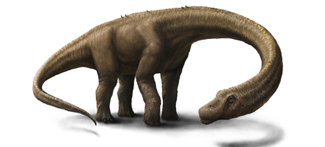 多分、世界最大級の恐竜の化石、発見されました