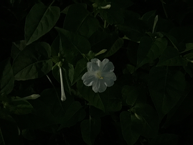 140929iphone6pluscamera-03.jpg