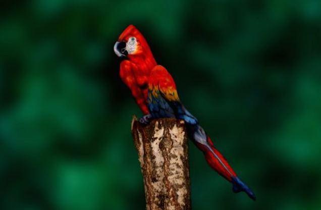 20140318_parrot2.jpg
