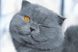 キラキラな瞳に見せるアイメイク術