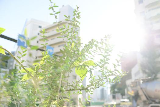 161111papuriko_4.jpg