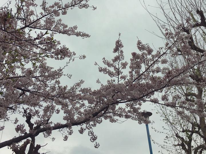 春。甘酸っぱいですね。 UNTITLED BY KIKUNO