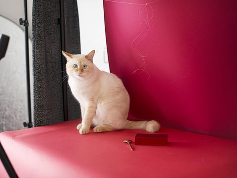 我が家の白猫はあわてん坊のサンタクロース #ねこのひげ