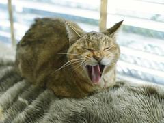 お猫さまはやっぱり賢い。「かわいい」のプロフェッショナルという生き方 #ねこのひげ