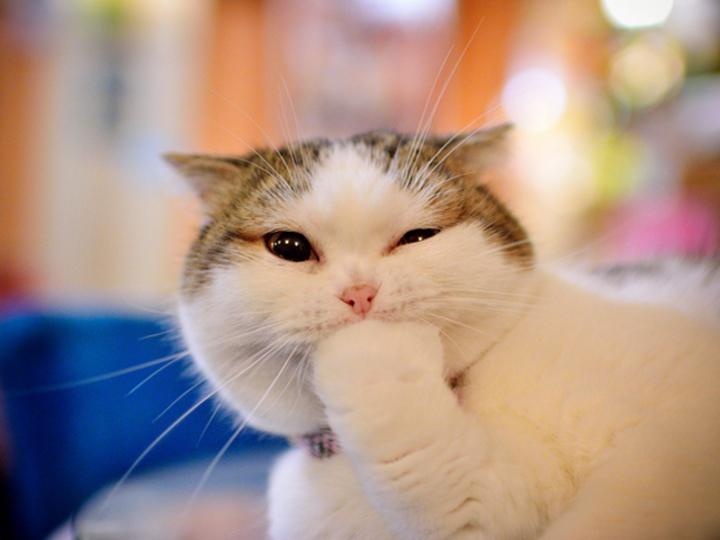 意外と計算高いのね...。ネコが人間をメロメロにさせるのには理由があった