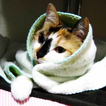 まとめ:風邪やインフルエンザにも負けない、病気対策14選