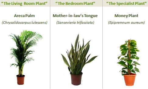 090423three_plants.jpg