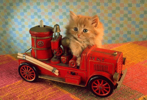 cat-.jpg
