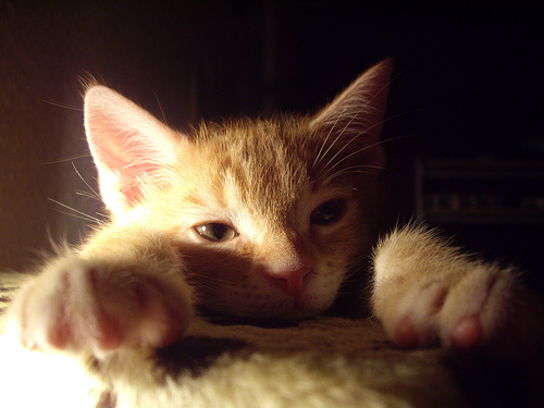 cat_newyear_tired-thumb-500x375-.jpg