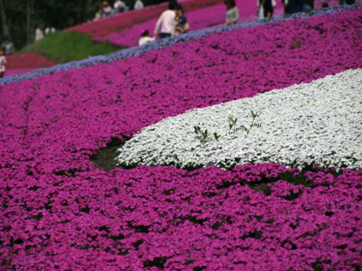 桜以外の花の見ごろや名所がわかるサイト