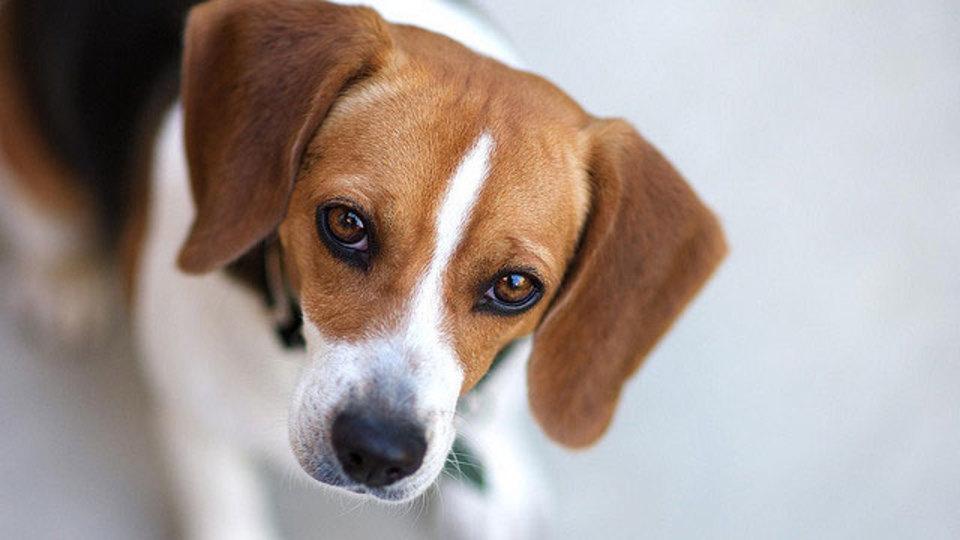 犬のトレーニングは短時間で余裕を持ったスケジュールにすると学習効果が高い