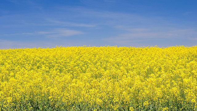 xlarge_flower-field.jpg