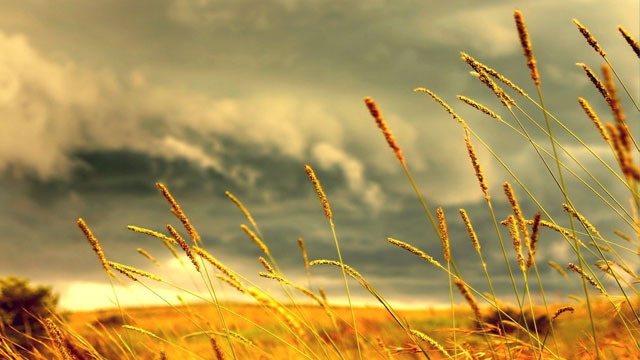 xlarge_grass.jpg