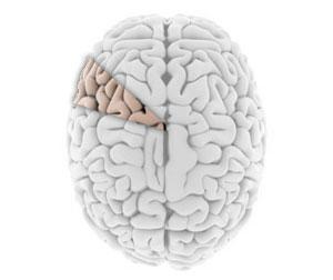 111231_ten-percent-of-brain.jpg
