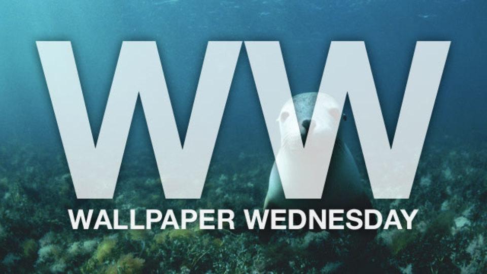 今週の壁紙堂vol.54「ウォーターウォールペーパー」
