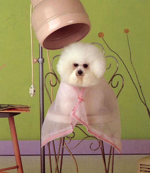 120128_puppy.jpg