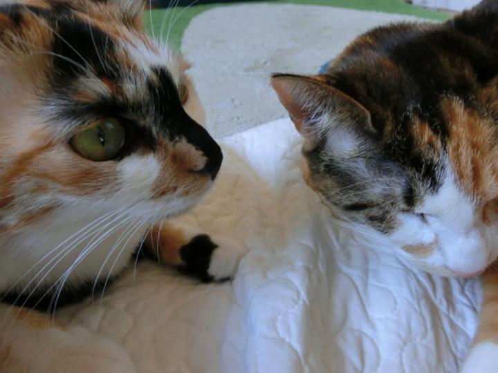 猫もネコもねこもキレイに撮れるカシオ「EXILIM ZR20」レビュー