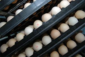 120701-1000-eggs.jpg