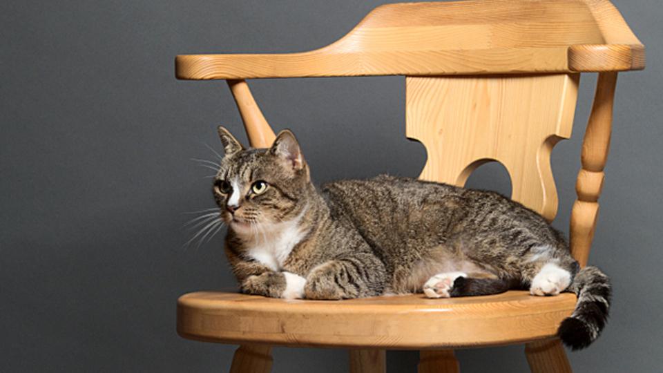 座った姿勢を美しくするには「重心を太ももに」を意識すると良い