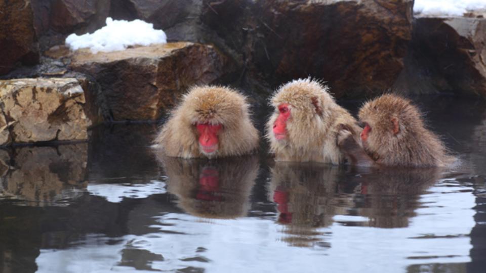 「入浴=半身浴」の思い込みを覆す、 「40℃15分の全身浴」のススメ