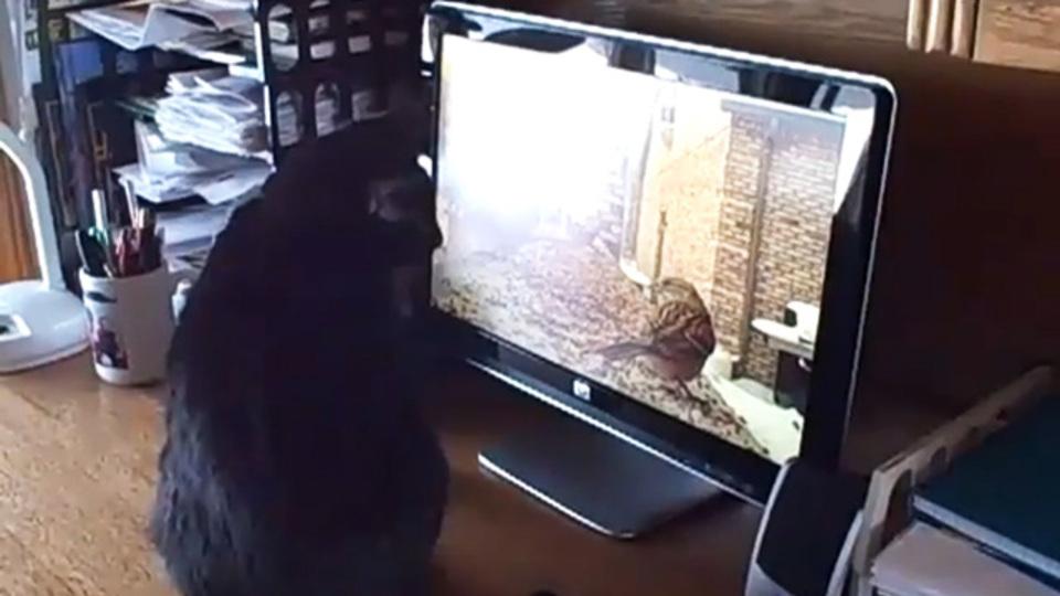 YouTubeにはネコ「が」見るための動画がある