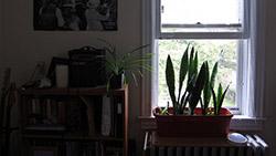 130116air_quality_plants.jpeg