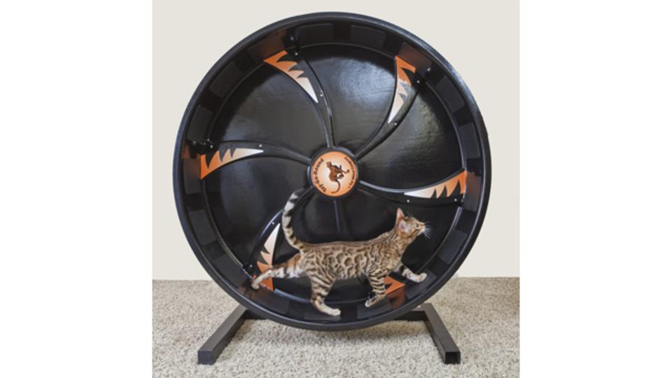 愛猫の運動不足に! キャット用ランニングホイール