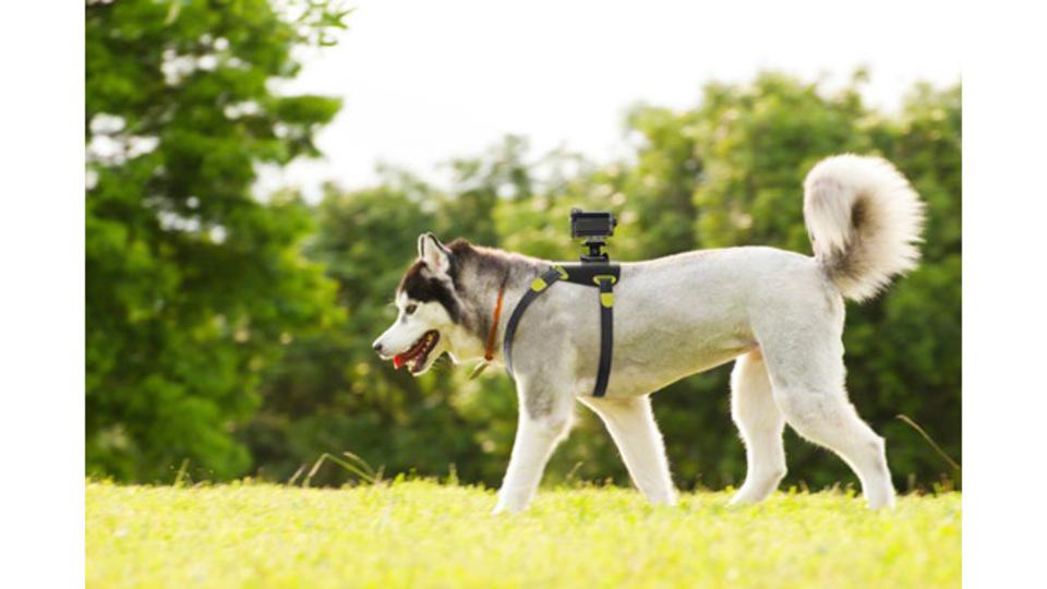 犬目線の動画を撮影できる「HDR-AS15」用のドッグハーネス